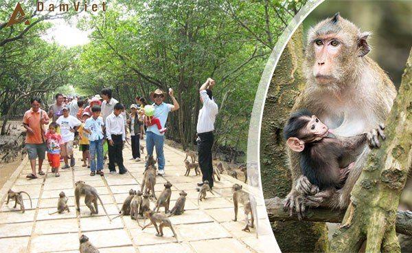 Tour Hạ Long – Lan Hạ – Đảo Khỉ – Cát Bà