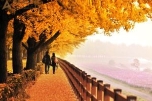 Du lịch Seoul – Nami – Everland