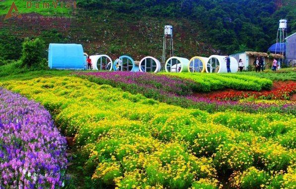Combo du lịch Mộc Châu