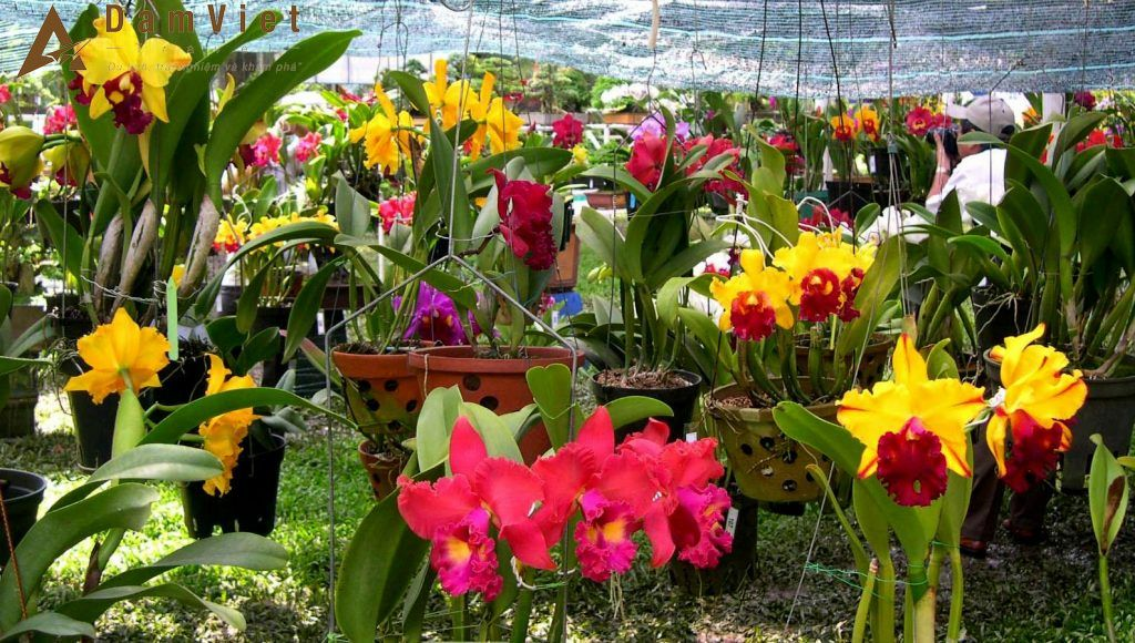 Vườn hoa nhiệt đới - Mộc Châu