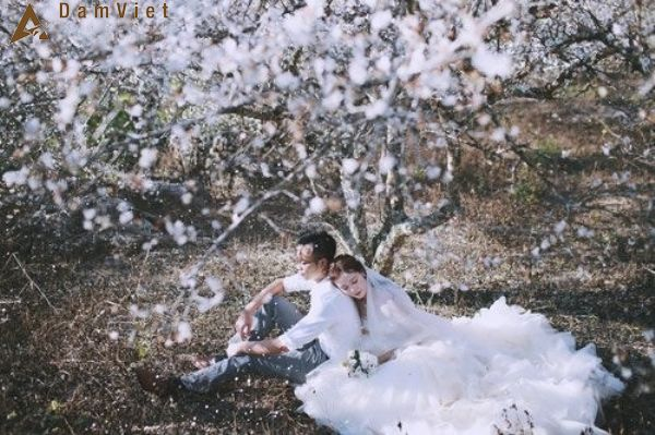 cặp đôi đến Mộc Châu chụp ảnh cưới