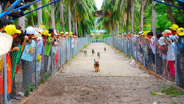 Đua chó trên đảo Khỉ
