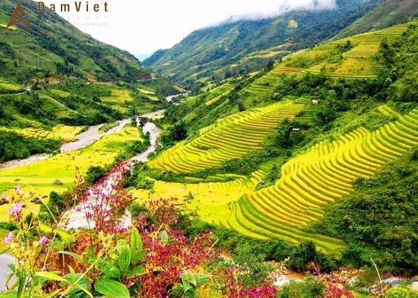 Thung lũng hoa