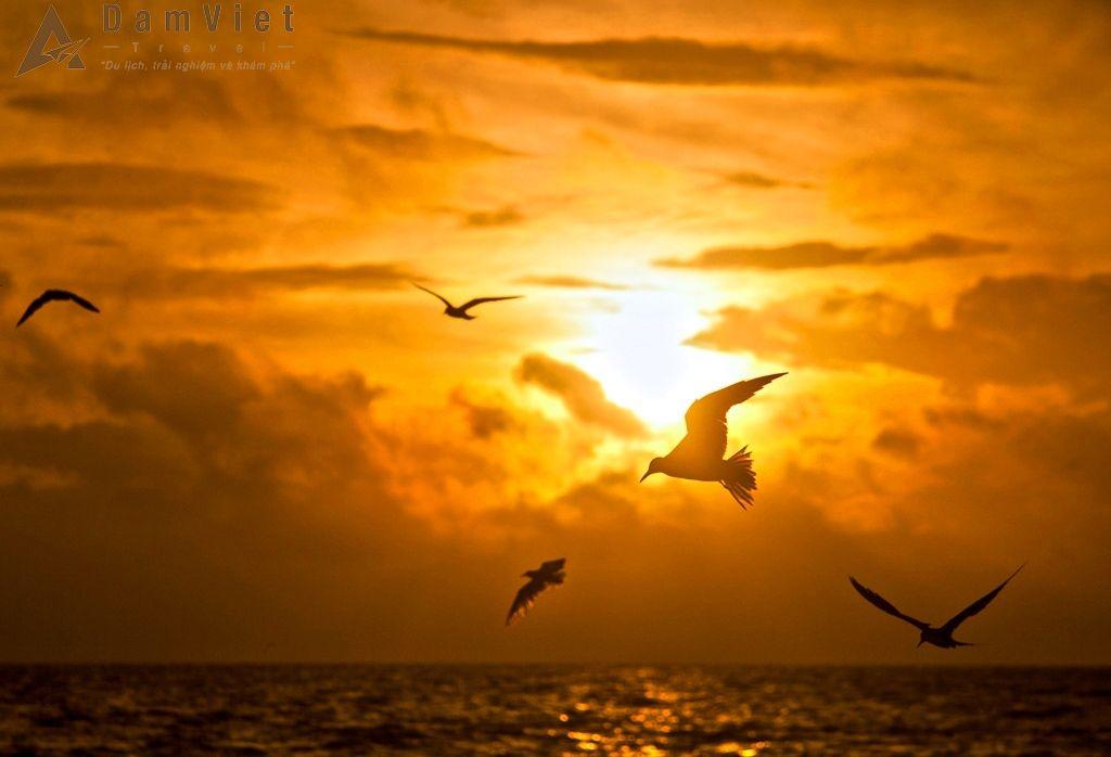 Chim hải âu trên vịnh Nha Phu