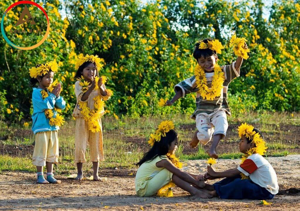 hoa dã quỳ ở mộc châu