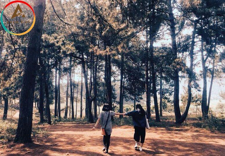 rừng thông Bản Áng