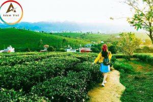 Du lịch Mộc Châu tháng 5 – Đà Lạt thu nhỏ giữa Cao Nguyên