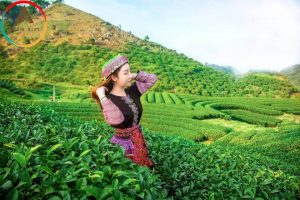 Du lịch mộc châu tháng 6 – Hương sắc của mùa hạ