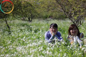 Du lịch Mộc Châu tháng 11 – Ngây ngất sắc hoa