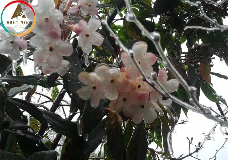 những bông hoa bị đóng băng