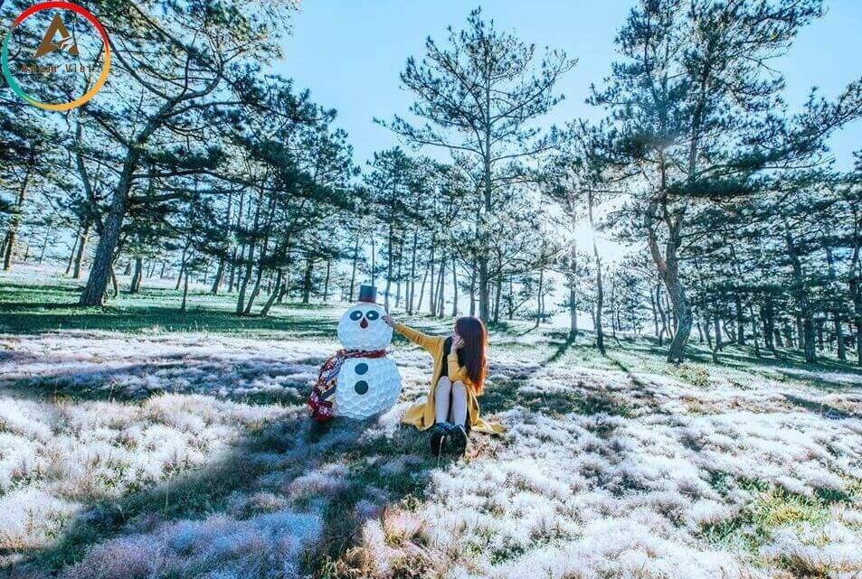 Đồi cỏ tuyết