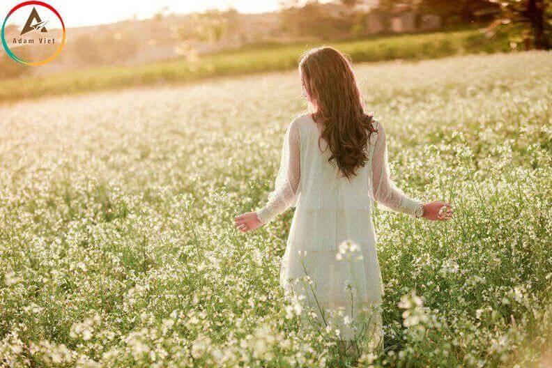 hoa cải trắng ở Đà Lạt