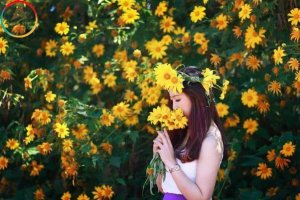 Du lịch Đà Lạt – những mùa hoa nào đẹp nhất