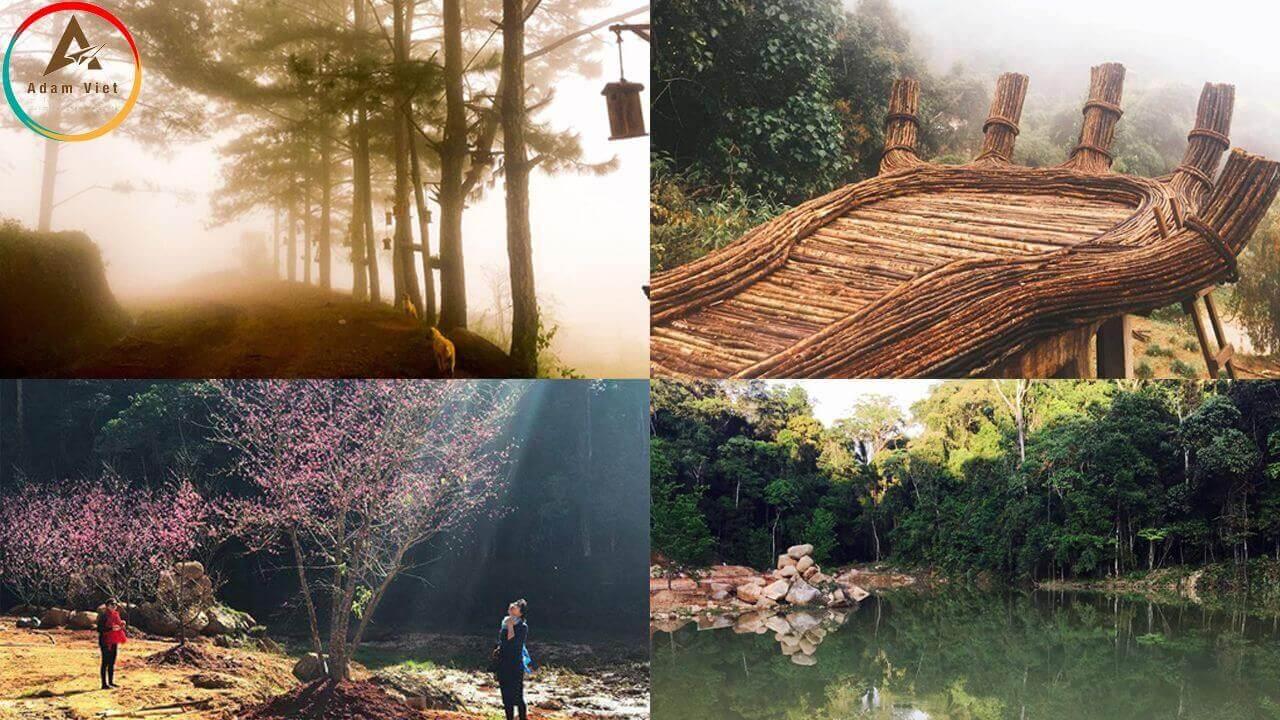 Du lịch Đà Lạt - Hoa Sơn Điền Trang