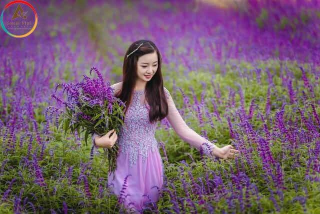 Hoa Oải Hương ở Đà Lạt