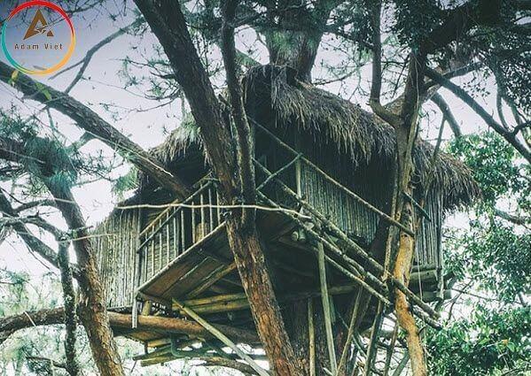 Những căn nhà gỗ trên những thân cây cổ thụ