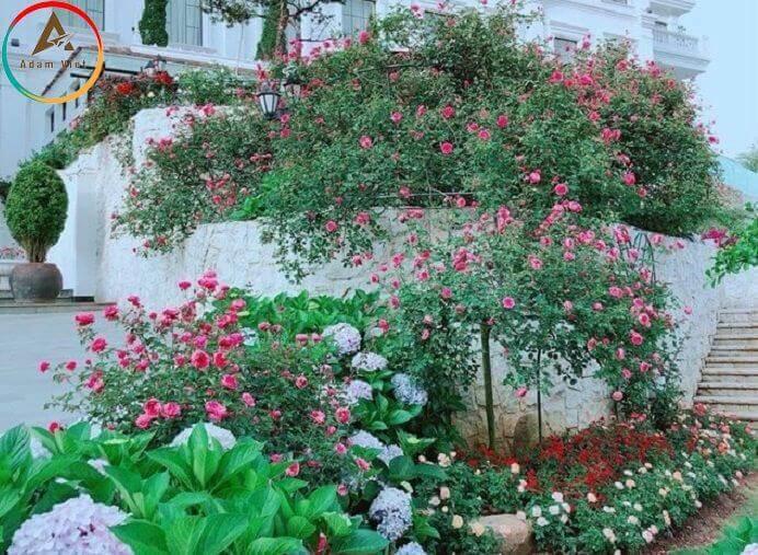 """Du lịch Sapa - khám phá """"cung điện hoa hồng"""""""