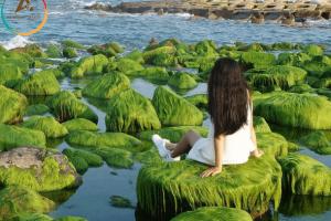 Du lịch Phú Yên – Chiêm ngưỡng thiên đường rêu xanh đẹp nhất Việt Nam
